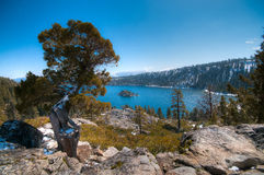 Lake Tahoe spring scene. An interesting tree at Lake Tahoe in early spring Stock Photo