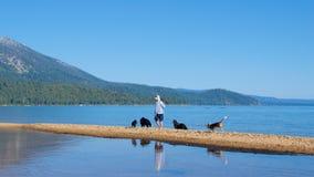 Lake Tahoe sul, Califórnia - em agosto de 2017: Persiga o amante que joga com os cães em Lake Tahoe sul em Califórnia Imagens de Stock