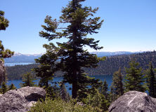 Lake Tahoe View. View of Lake Tahoe through the trees royalty free stock image