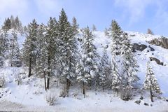 Lake- Tahoewinter-Szene Stockfotos