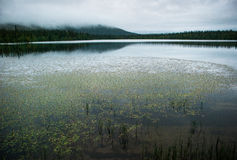 Lake in the Taiga. A scenery of a lake in the taiga with typical summer weather royalty free stock photos