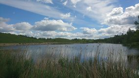 Lake through tall grass in beautiful day Royalty Free Stock Images