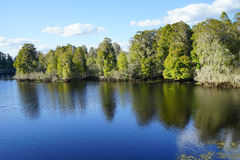 A lake in Tampa. A beautiful lake in Tampa, Florida Stock Photography