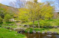 Lake Tanuki in Fujinomiya, Shizuoka, Japan Royalty Free Stock Photography