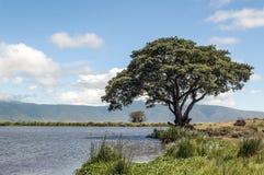 Lake in Tanzania Stock Images