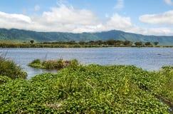 Lake in Tanzania Stock Image