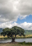 Lake in Tanzania Stock Images