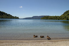 Lake Tarawera Stock Photography
