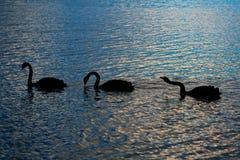 Lake Tarawera - Rotorua royalty free stock photos