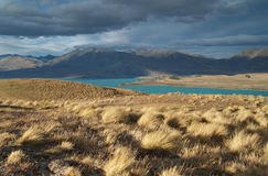 Lake Tekapo Stock Image