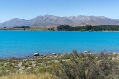 Lake Tekapo Arkivfoton