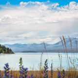 Looking at Lake Tekapo, New Zealand. Lake Tekapo seeing from the shore in Canterbury, New Zealand on a fair summer day with some wild flowers in the foreground Stock Images