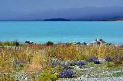 Lake Tekapo Summer , New Zealand Royalty Free Stock Photography