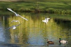 Temple Newsam Park lake stock photos