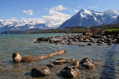 Lake Thun. Boulders and death tree trunk laying on the edge of Thunersee in front of Niesen royalty free stock photos