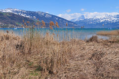 Lake Thun. Seen in early springtime seen from the west stock photography