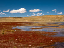 Lake in Tibet Royalty Free Stock Photos