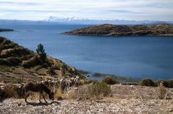 Lake Titicaca in Bolivia Royalty Free Stock Image