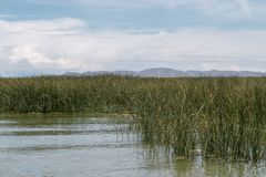 Lake Titicaca by day. Lake Titicaca landscape with cane thicket on foreground stock image