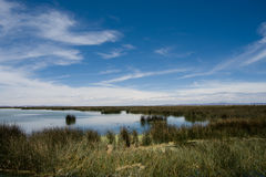 Lake Titicaca Grass. Sky on Grass and Water at Lake Titicaca, Puno, Peru, South America stock image