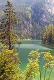 Lake tovel in the dolomites, italy Stock Image