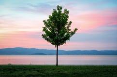Lake Trasimeno (Umbria Italy) Stock Photography