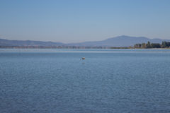 Lake Trasimeno. View of Lake Trasimeno on a clear day Royalty Free Stock Image