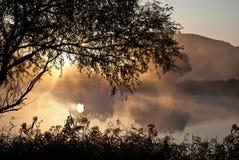 Lake and tree Stock Image