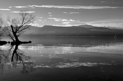 Lake and tree BW Royalty Free Stock Photography