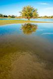 Lake with tree, Kalahari, South Africa Stock Photos