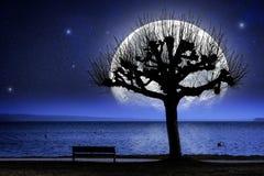 Lake, tree and oversized moon Stock Photos