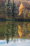 Lake with tree reflections Royalty Free Stock Photography