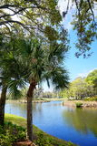 Lake and tree in a resort. In Jacksonville, Florida, USA Stock Photography