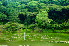 Lake and tree. Somewhere in Japan with lake and tree Stock Image