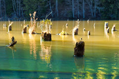 Lake tree stumps Stock Photo