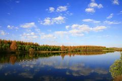 Lake and trees Royalty Free Stock Photos