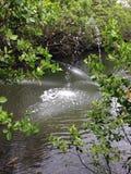 Lake. Between trees Stock Image