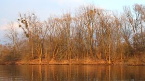 Lake with trees behind in autumn. Lake with trees behind at sunset in autumn stock video footage