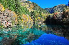 A lake and trees with colourful leaves in Jiuzhaigou Royalty Free Stock Photo
