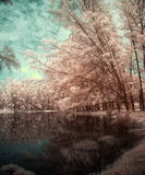 Lake and trees in infrared view Royalty Free Stock Photo