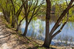 Lake and trees Stock Image