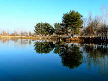 On the lake. Trees reflected in a lake in the outskirts of Dushanbe Tajikistan Stock Images