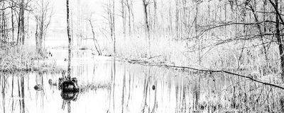 Lake with trees reflection panorama Royalty Free Stock Photos