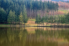 Lake with trees reflex Stock Photo