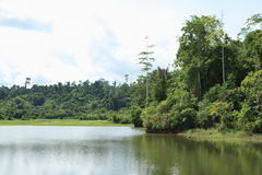 Lake with trees Stock Images
