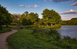 Lake with trees in the sunset Stock Image