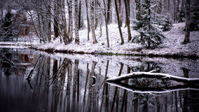 Lake. Trees and lake in the winter stock photos