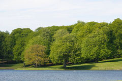 Lake and tress Stock Images