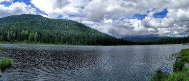 Lake trillium in Oregon  Royalty Free Stock Photos
