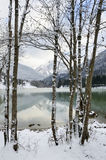 Lake trough trees. Stock Images